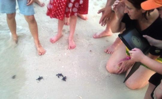 Go, turtles, go!